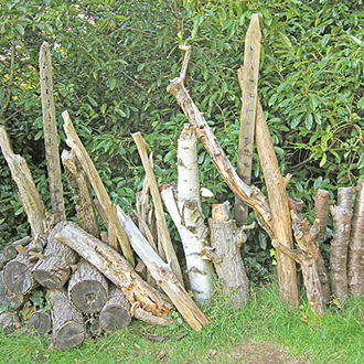Old logs in a sunny position provide opportunities for bees, wasps, flies and beetles