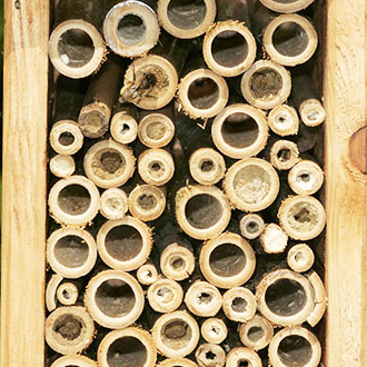 Unfortunately birds got at a high proportion of the completed Osmia bicornis nests in 2011