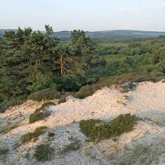 A classic heathland setting, but with Studland Beach only 300 metres away